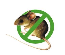 Bẫy keo dính chuột AN SINH