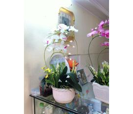 Chuyên bán buôn bán lẻ hoa trang trí các loai,giá cực rẻ mà lại cực đẹp ,mời các bạn ghé qua