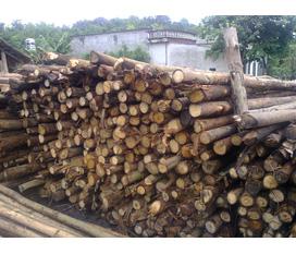 Cân bán côp pha, hàng xẻ quy cách gỗ thông, gỗ keo