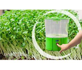 Máy làm giá đỗ, máy trồng rau sạch công nghệ Hàn Quốc giảm giá hấp dẫn, bảo đảm chất lượng, bảo hành 1 năm 1 đổi 1