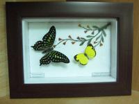 Tranh bướm 20110224135813_img_1557