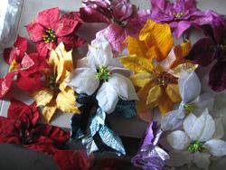 Ảnh số 10: hoa trạng nguyên - Giá: 5.000
