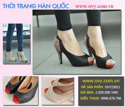Ảnh số 7: Giày Hàn Quốc công sở - Giá: 2.050.000