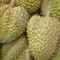Nhận phân phối sỉ, lẻ sầu riêng cơm vàng hạt lép chín cây loại một và bơ sáp daklak