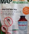Hình ảnh: Rệp hút máu người và thuốc