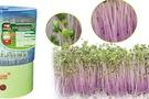 Máy trồng rau mầm Facare nhật bản chính hãng giá rẻ .