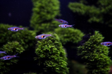Cá Tam Giác