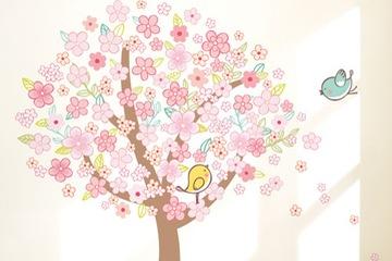 KR 0081 Spring