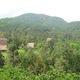 Bán nhà đất Lâm Đồng, đất vườn cây ăn trái, đất đẹp, gi.