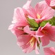 Bonsai hoa giấy cực xinh trang trí nhà cửa, văn phòng, quà tặng... .