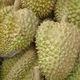 Nhận phân phối sỉ, lẻ sầu riêng cơm vàng hạt lép chín cây lo.