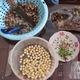 Sen tươi Huế, món quà mùa hạ, ấm áp thu đông 2015.
