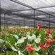 Nhà lưới trồng lan,hồng môn giá rẻ..85k/m2.