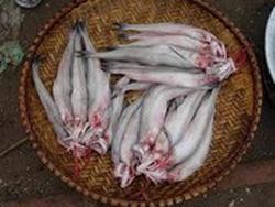 Ảnh số 1: Cá Khoai - Giá: 150.000