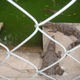 bán cá sấu tươi sống nguyên con.